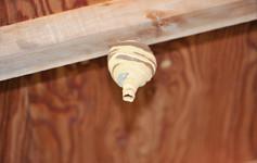 蜂の専門家が教える!まだ小さい蜂の巣を安全に駆除できる3ステップ