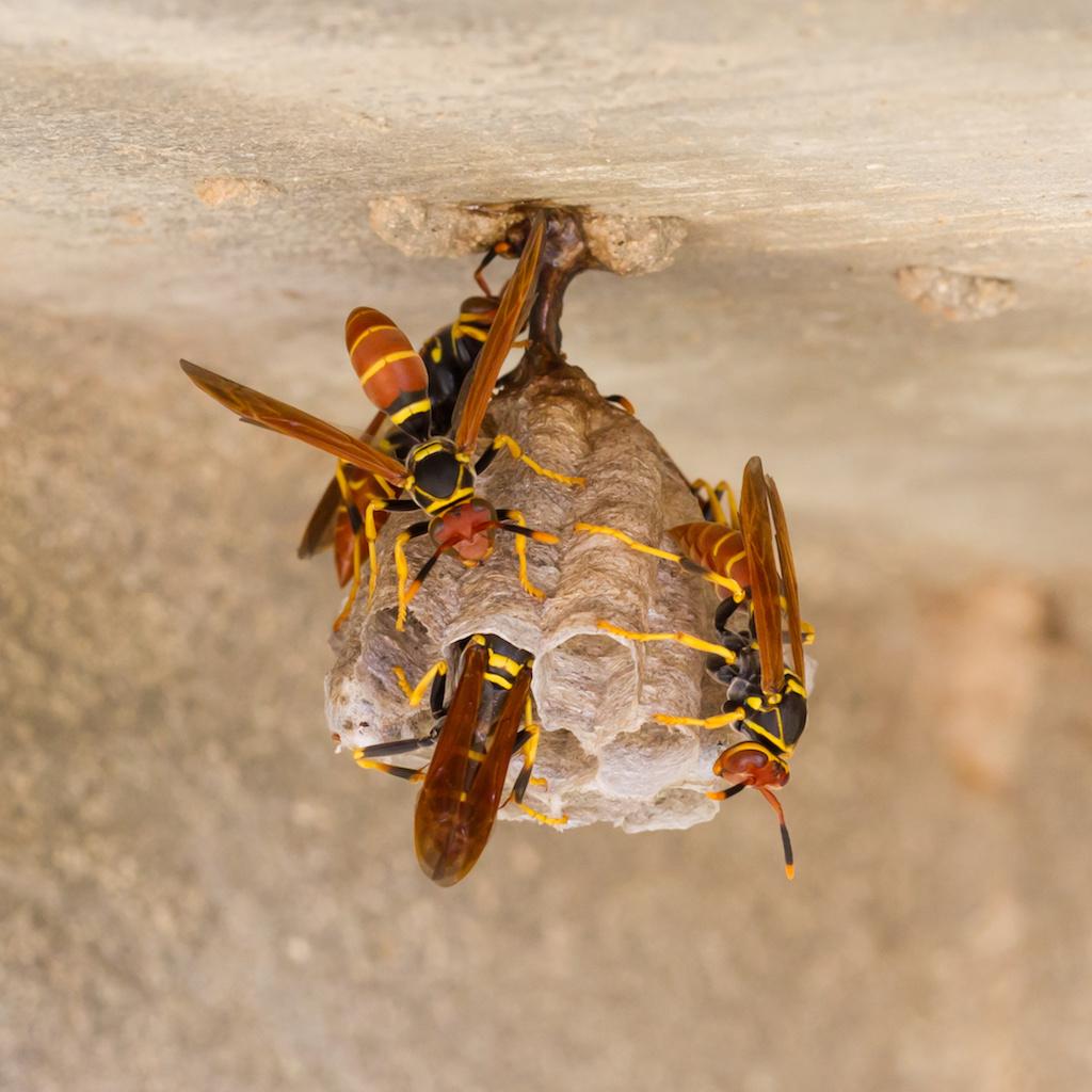 働き蜂がいる巣
