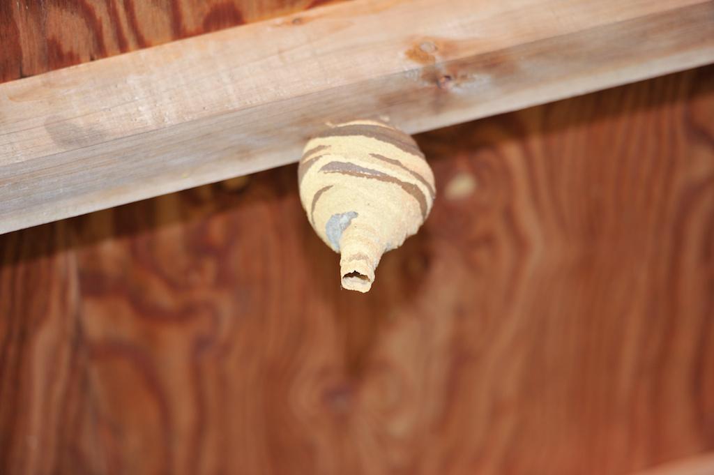 小さい蜂の巣
