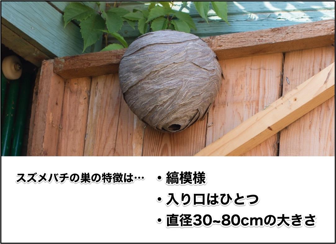 スズメバチの巣の特徴は、縞模様、入り口がひとつ、直径は30~80cmの大きさです。